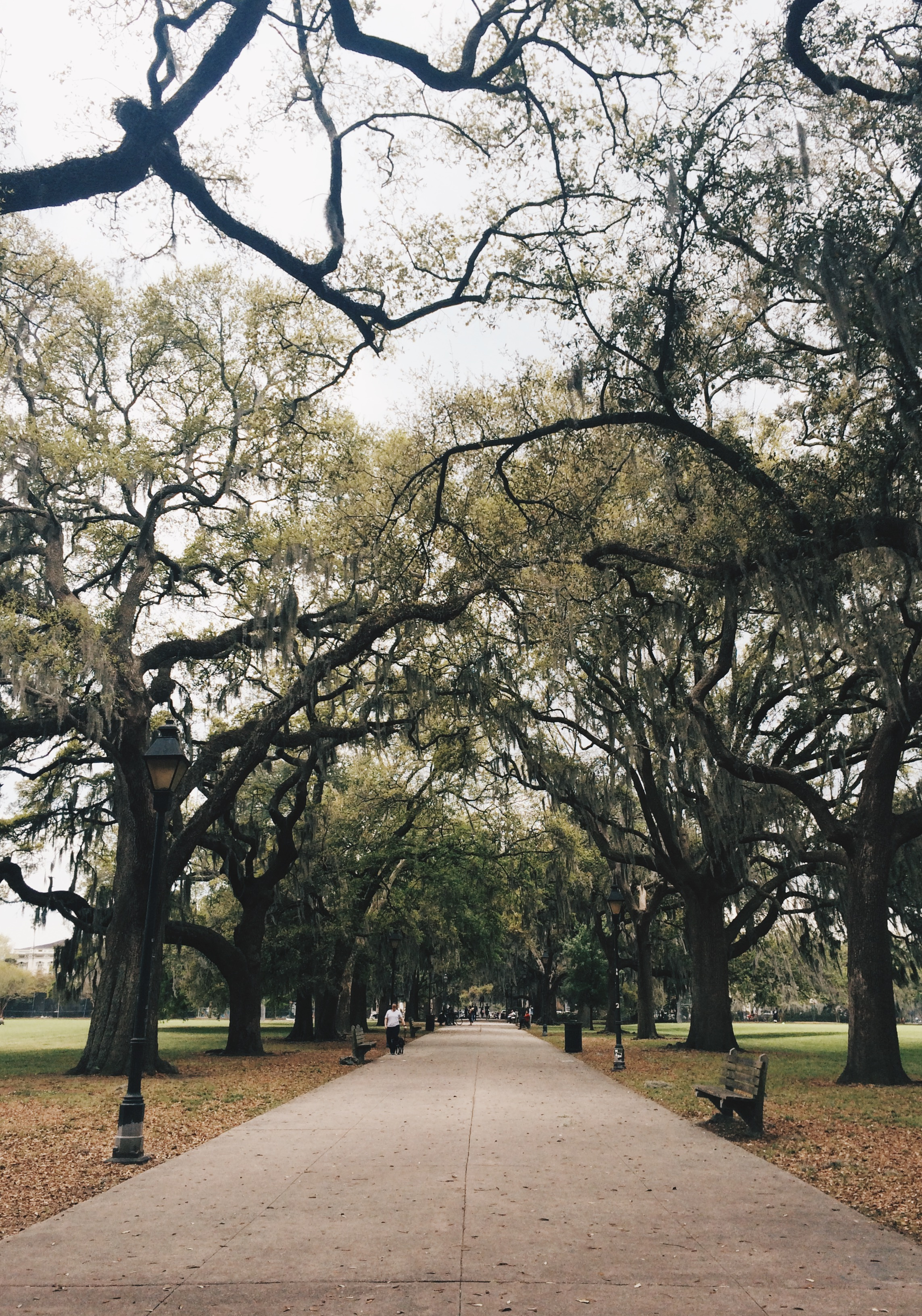 Forsyth Park, Savannah, where many characters interact. Photo by Raquel Reyes.