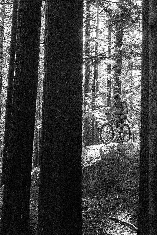 ClimbMax in the trees b&w 2.jpg