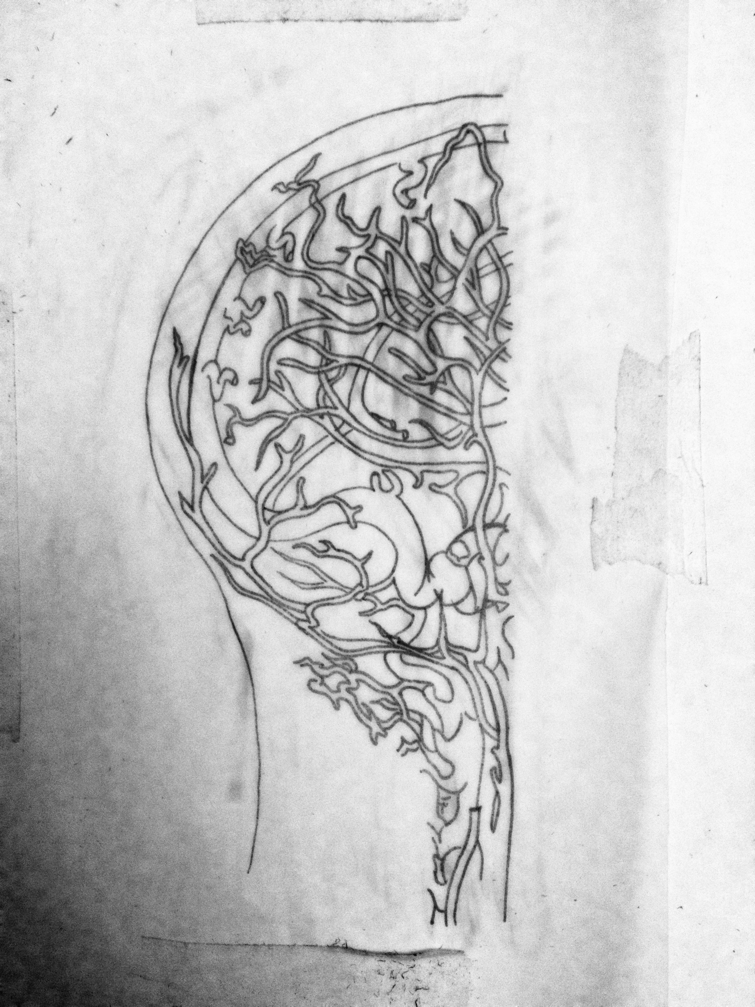 skull vasc.jpg