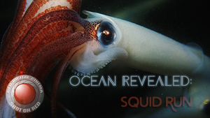 squid+run.png