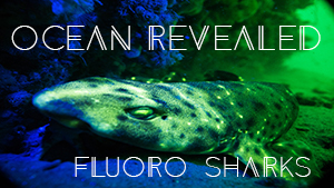 Swell Shark Cover Image w Text-1.jpg