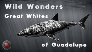 Great White Cover Image w Text and Red logo.jpg