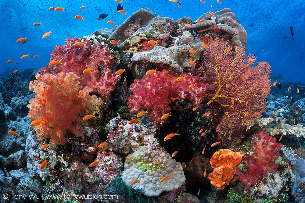 Coral Community