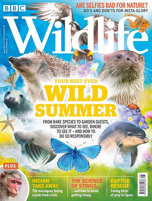 bbc-wildlife-magazine.jpg
