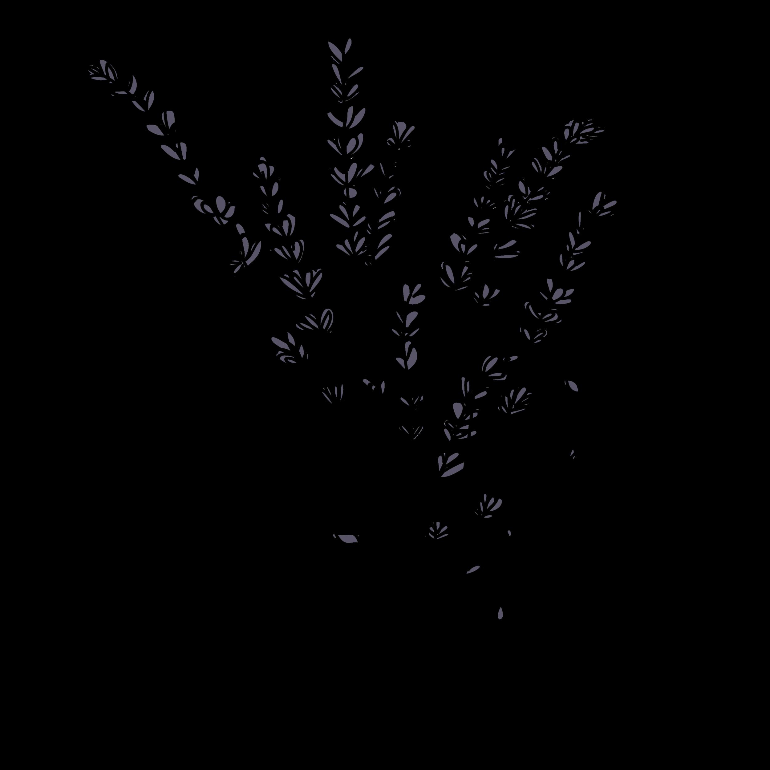 lavender-12.png