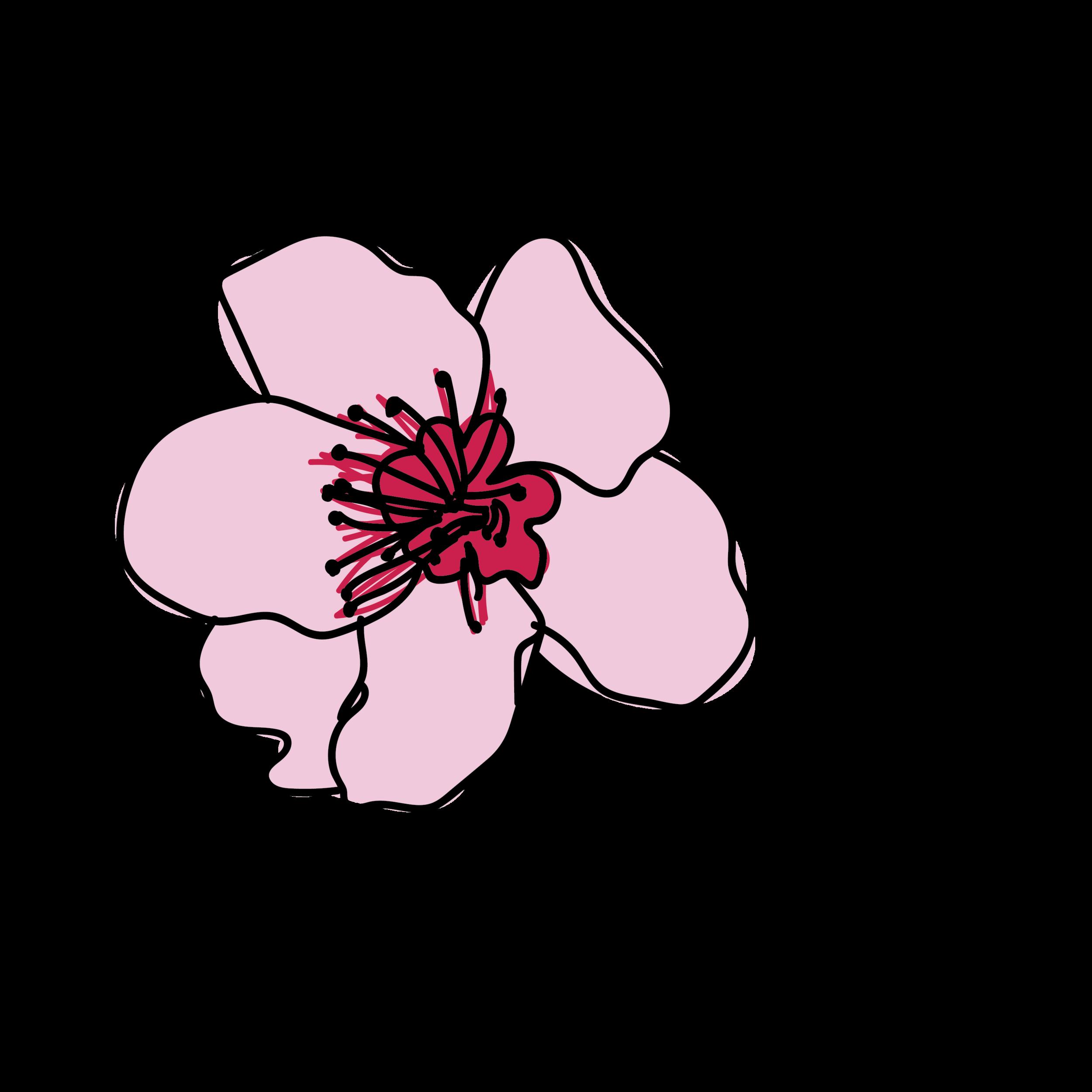 Nectarine-14.png