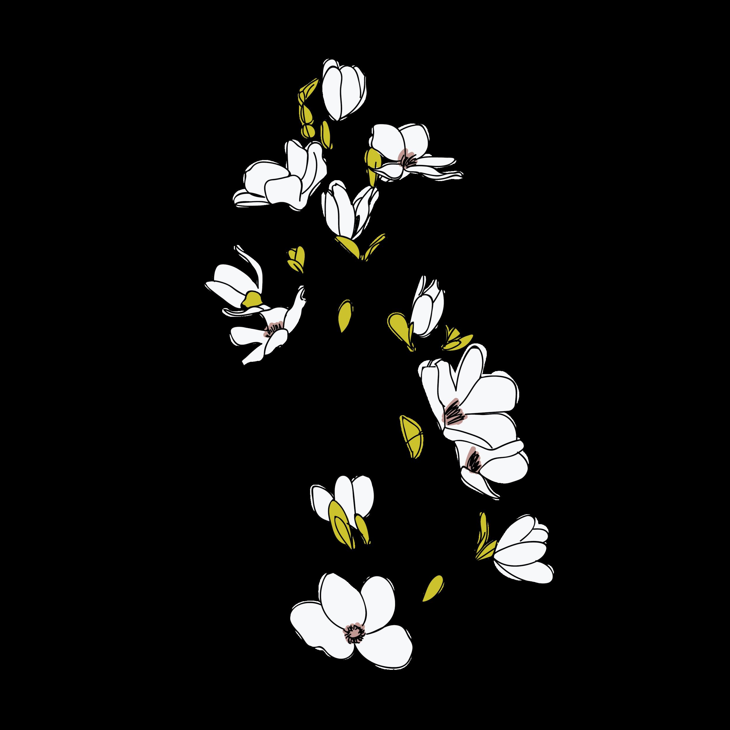 Magnolia-13.png