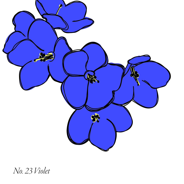 Violet-24.jpg