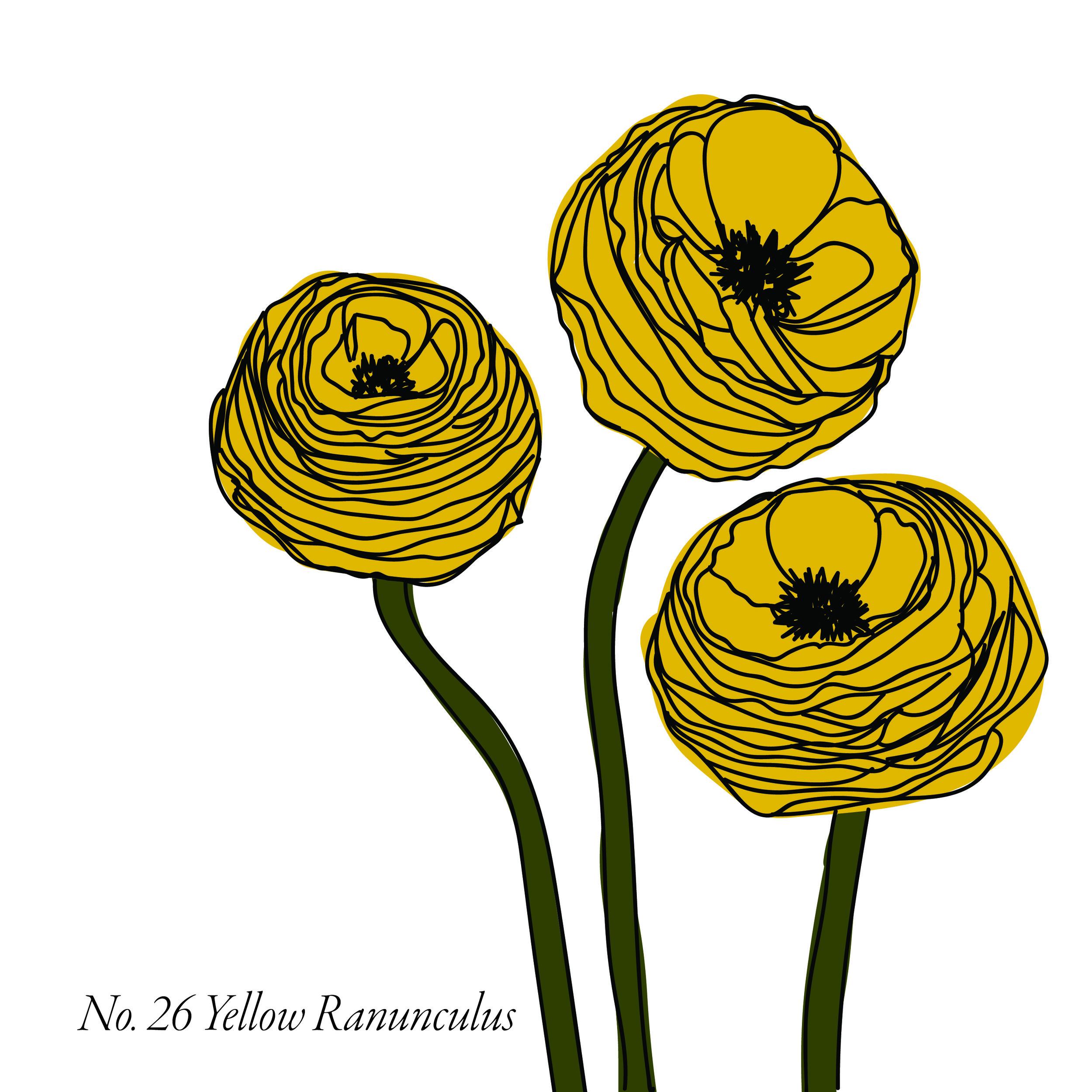 YellowRanunculus-27.jpg
