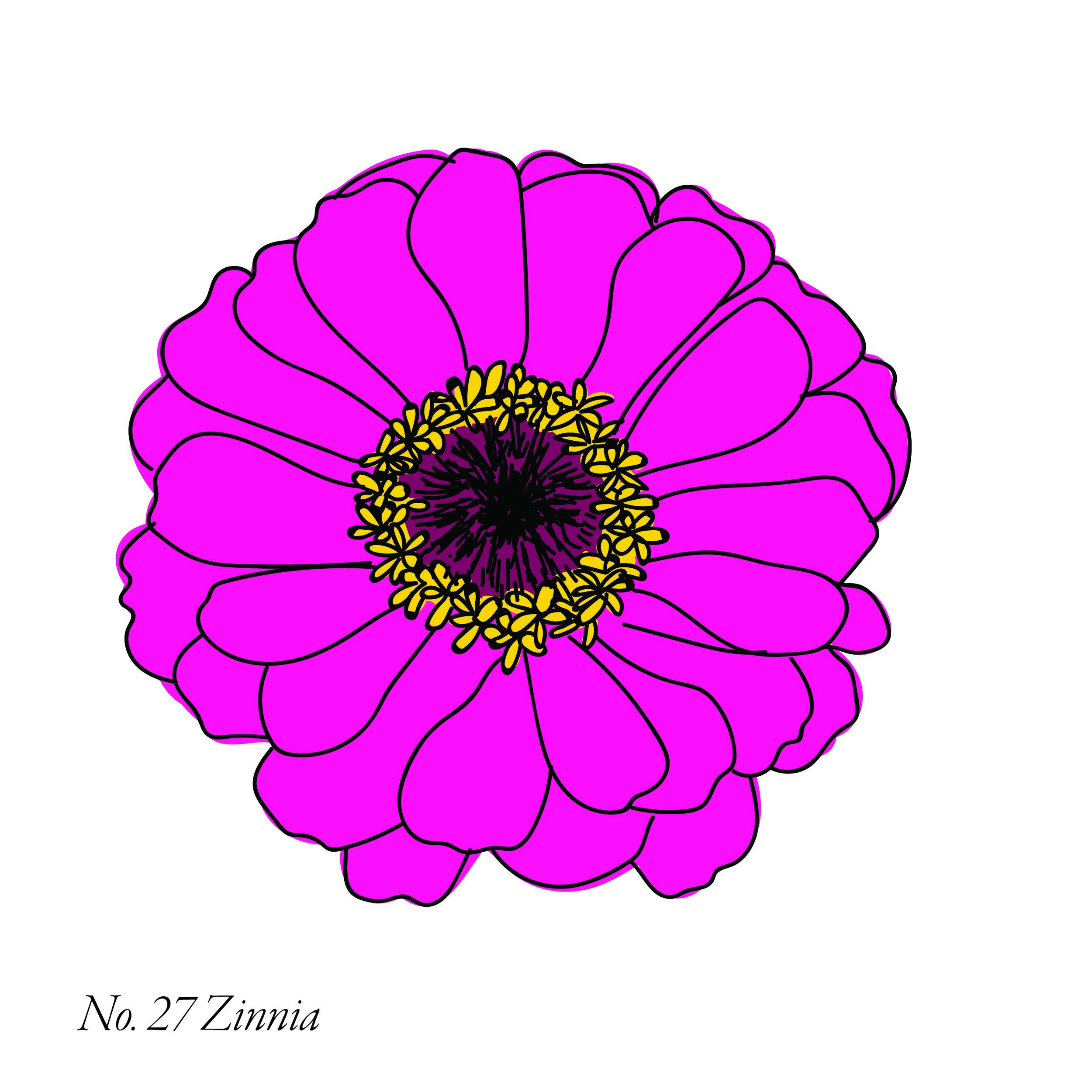 zinnia-28.jpg