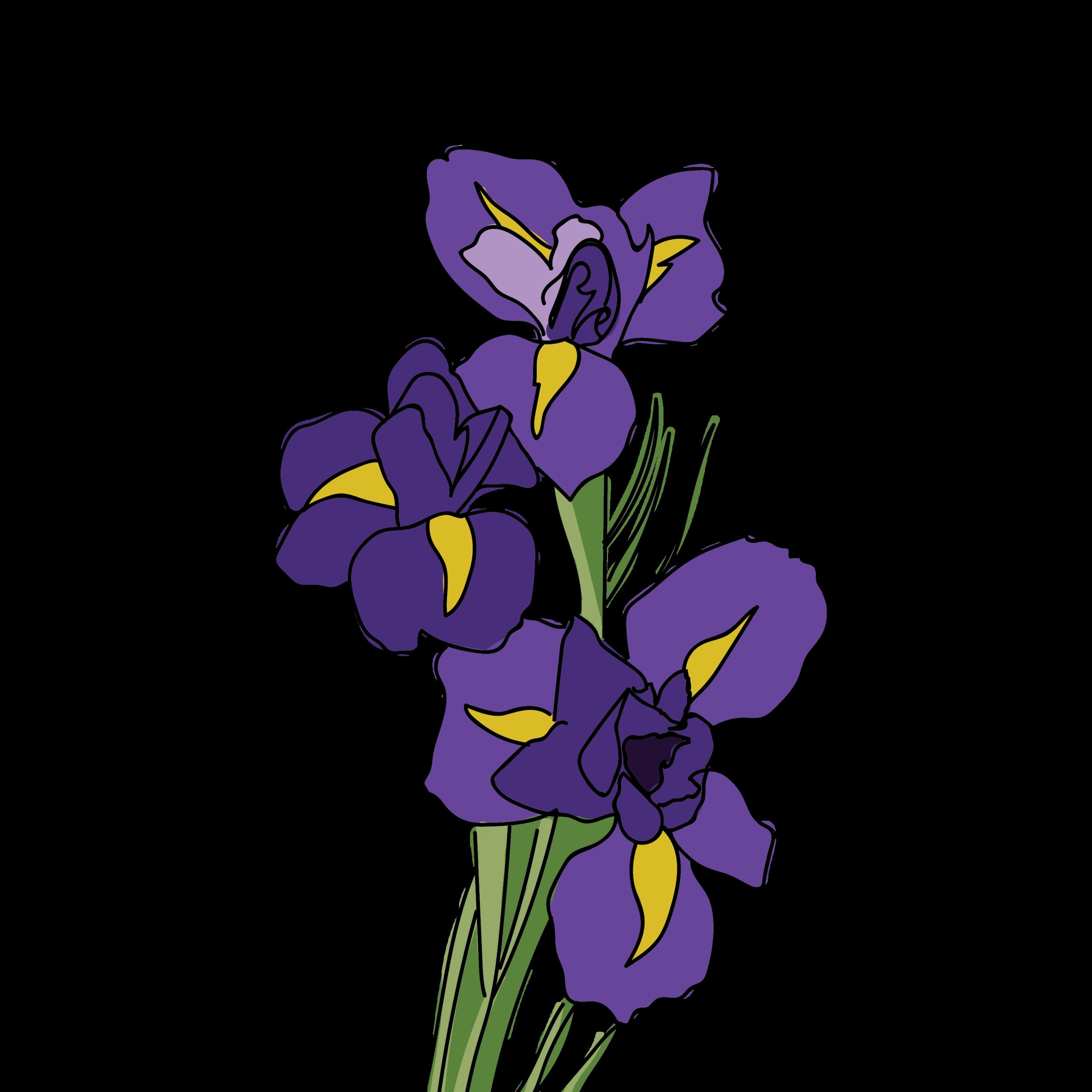 Iris-09.png