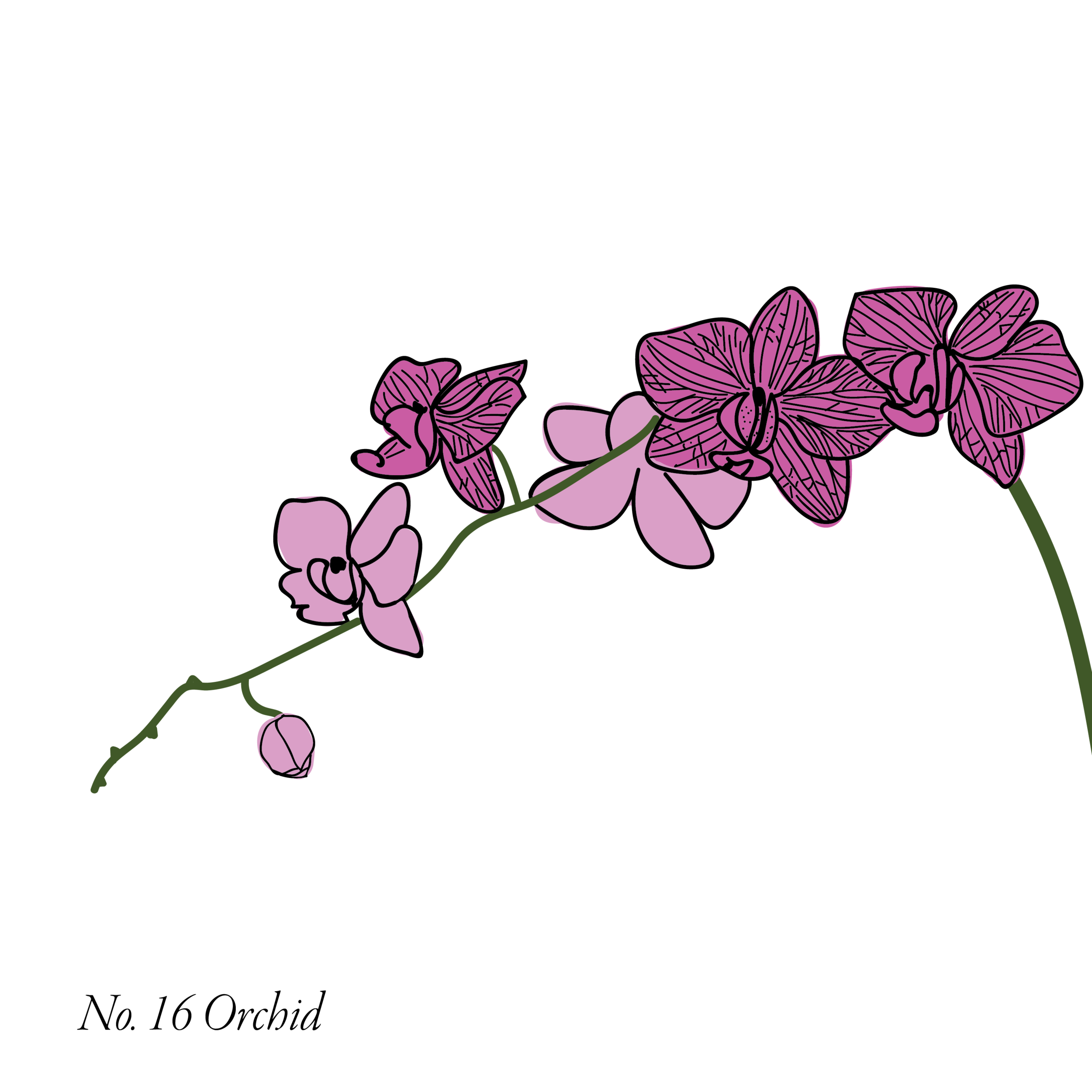 Orchid-17.png