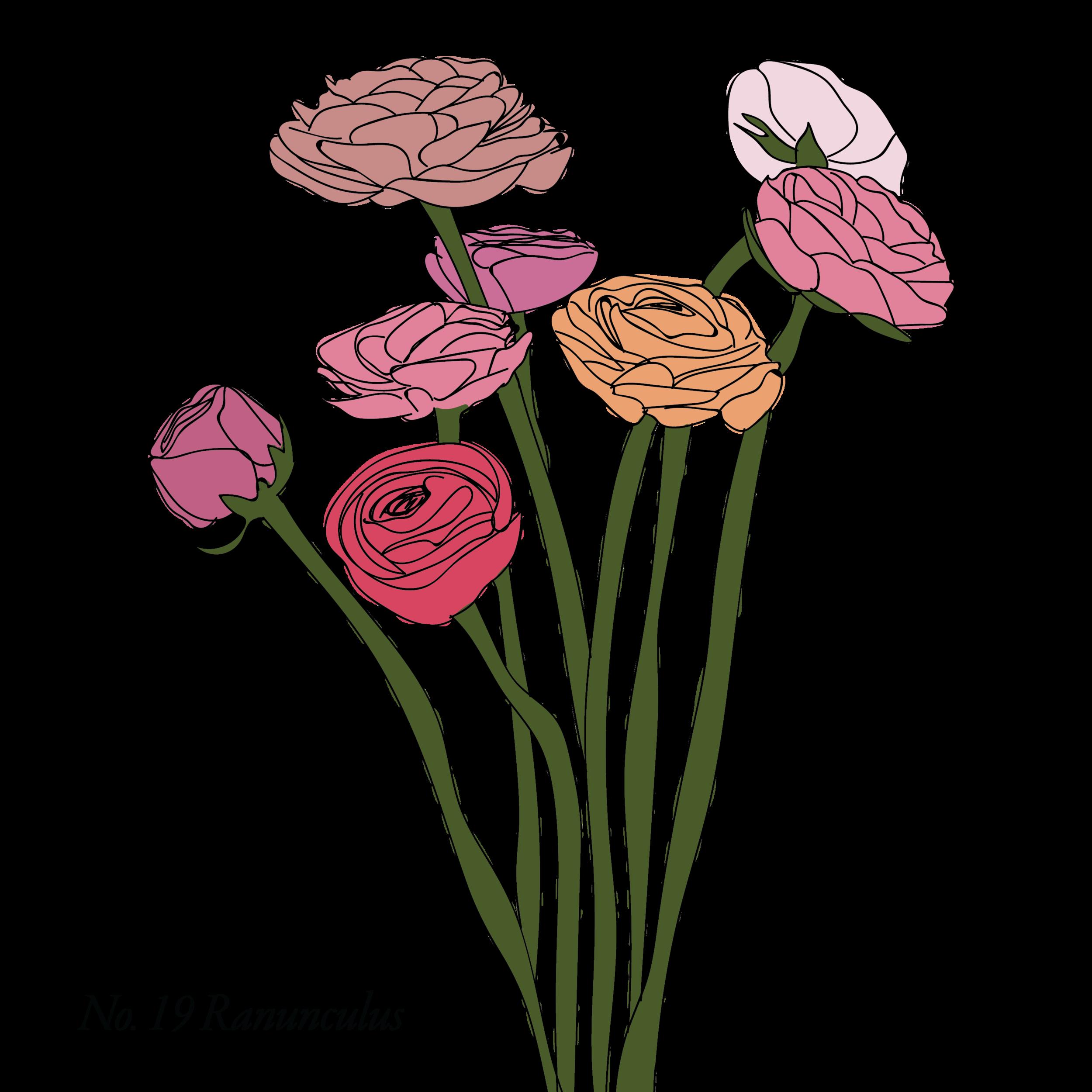 Ranunculus-19.png