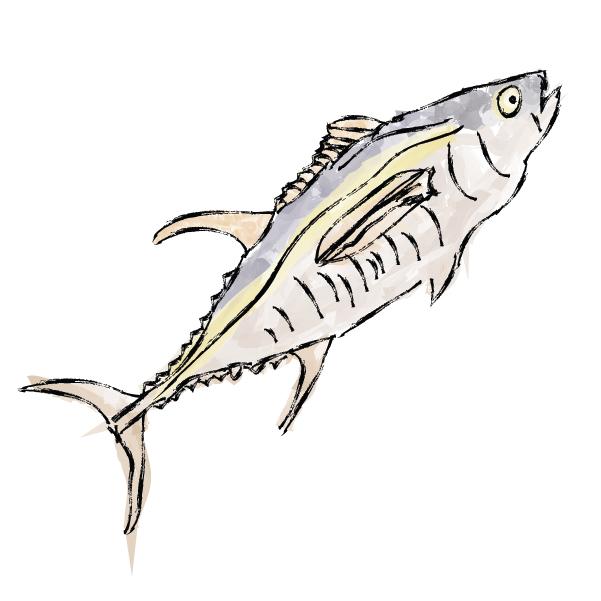 Polvo Tuna Illustration