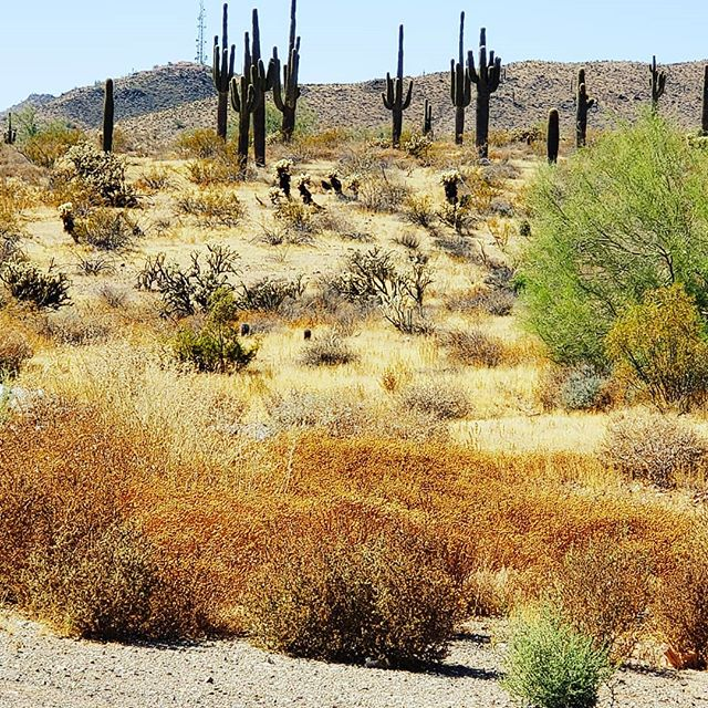 One of the prettiest deserts is the Sonora desert.