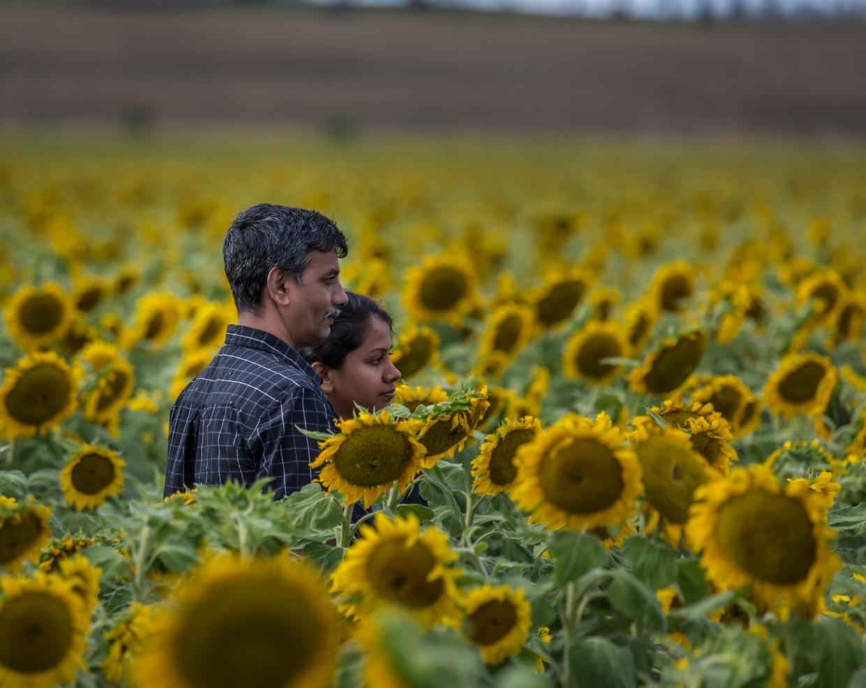 sunflowers-0214-Edit.jpg