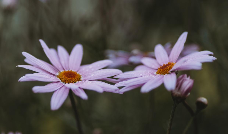 Botanic-0013.jpg
