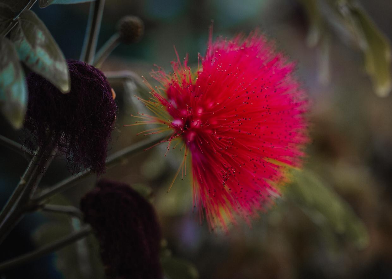 Botanic-0031.jpg