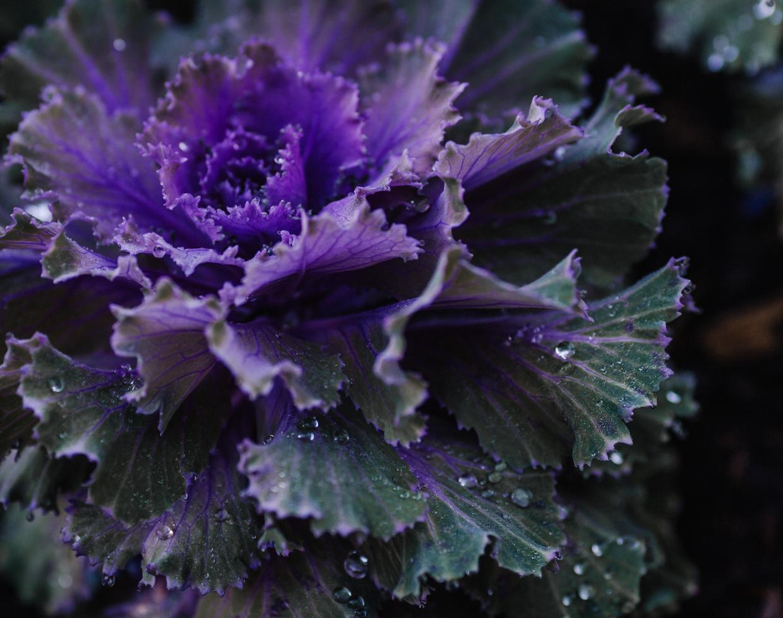Botanic-0112.jpg