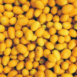 Lemons Smaller.JPG
