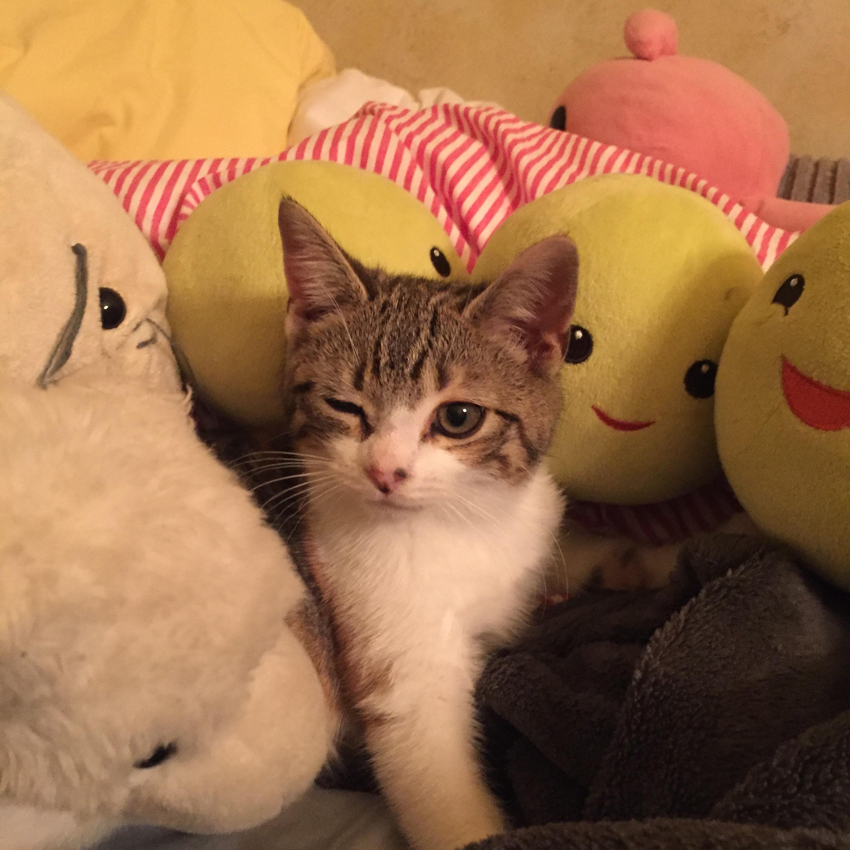 winking kitty