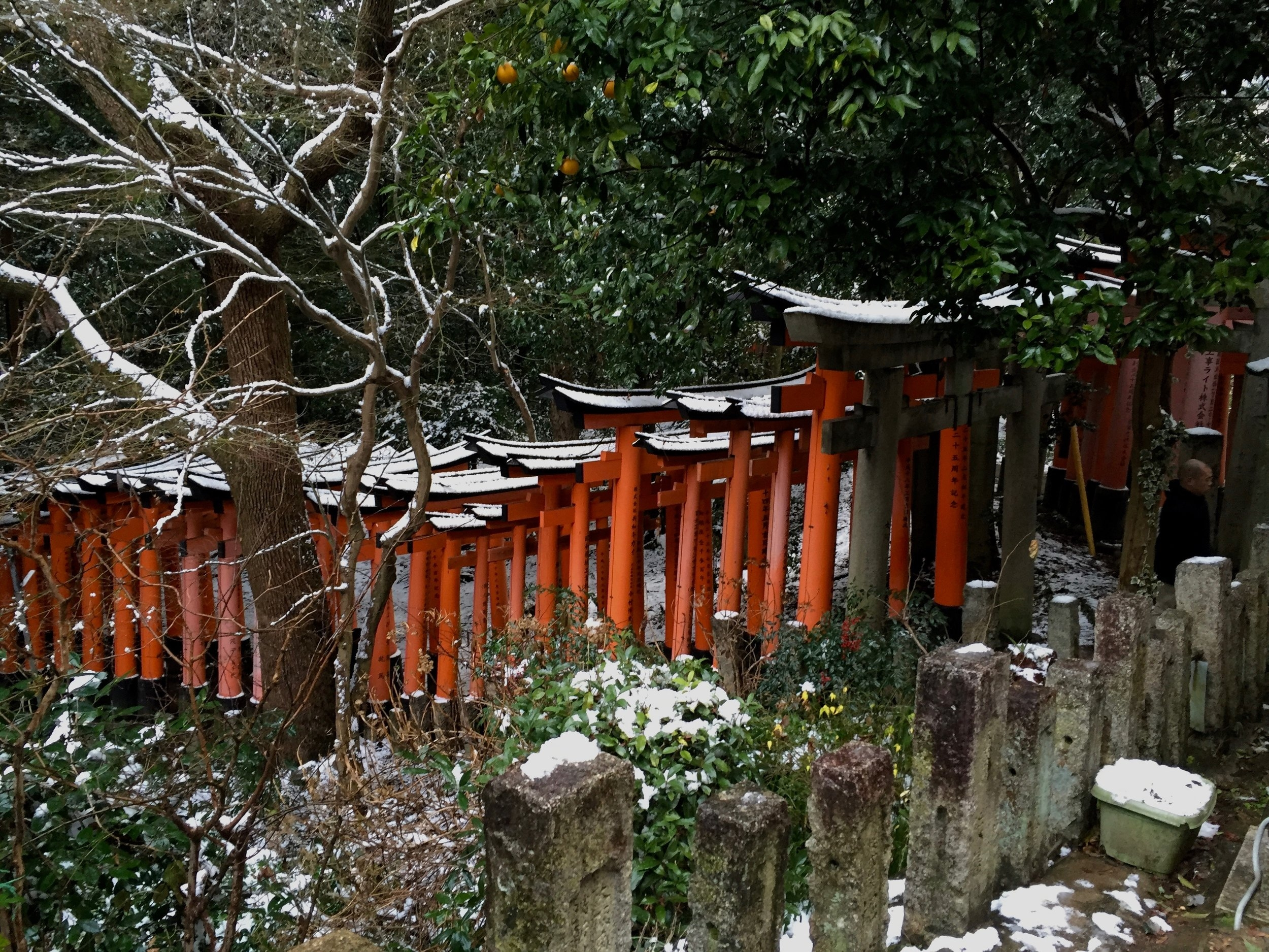 snowy fushimi inari in kyoto, japan with nature and bright orange mandarines on a cold winter day in 2017.