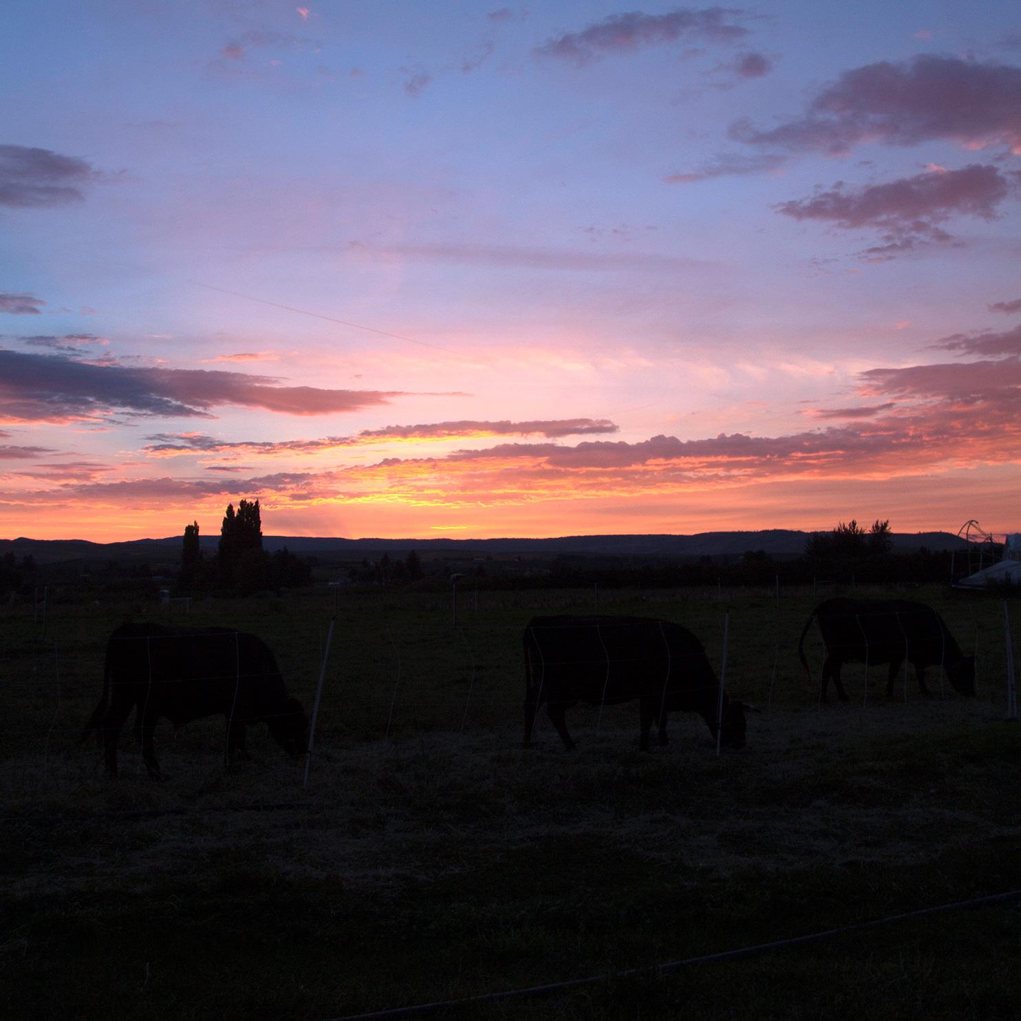 Square_sunset.jpg