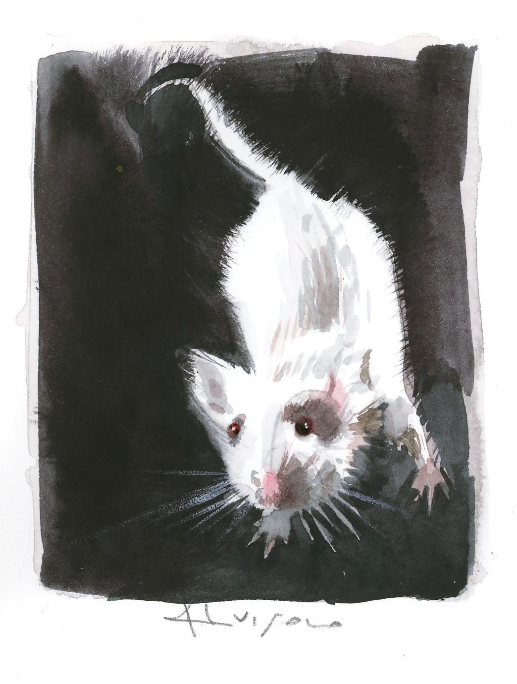 sì, è un topo