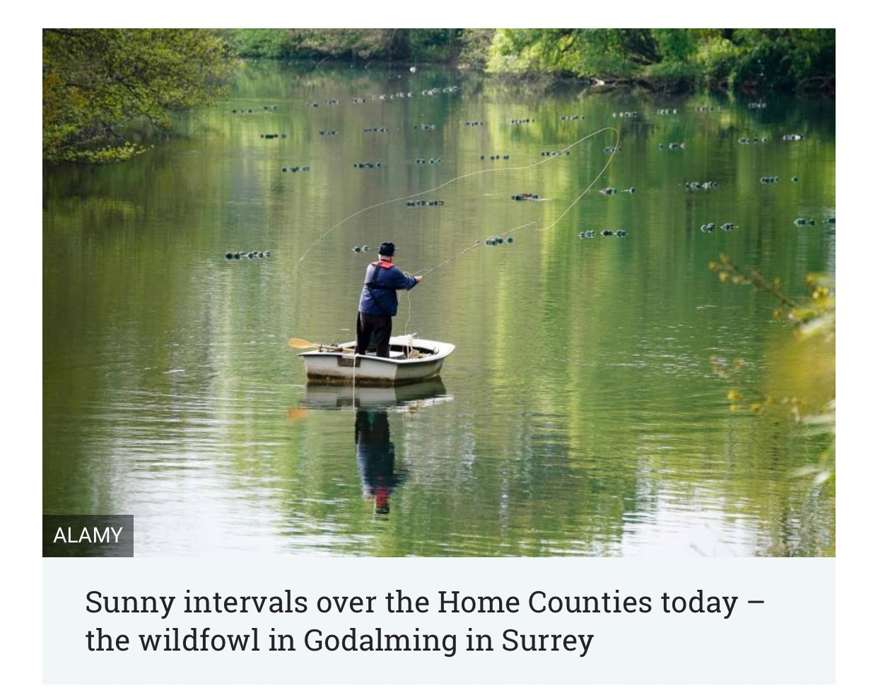 Waterfowl in Godalming Surrey.jpeg
