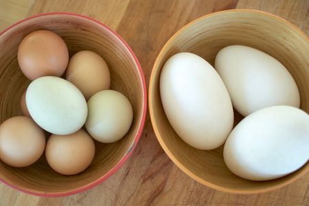 The Benefits of Goose eggs!! - Have you ever wondered if you can eat an egg from a goose????
