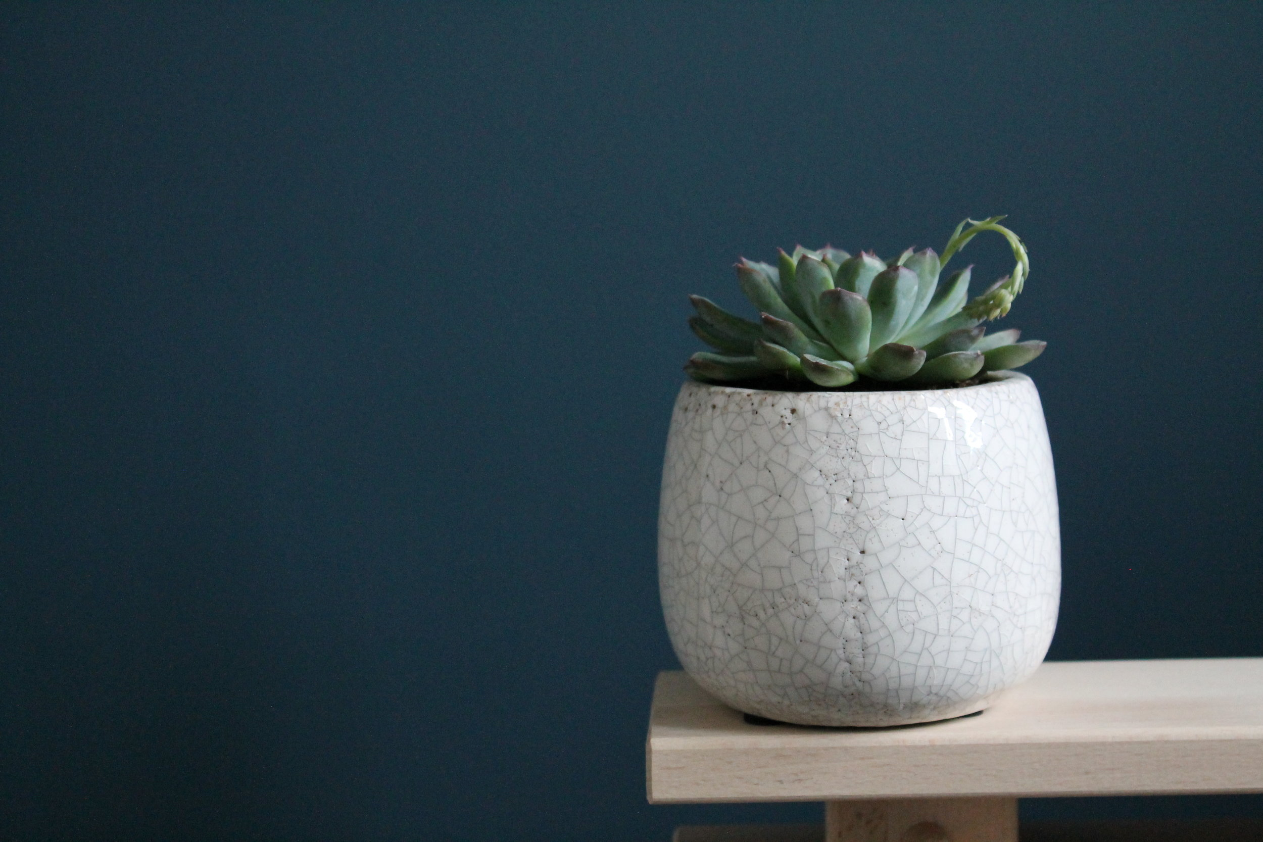 Amalfi Ceramic Pot - The Amalfi ceramic pot is handmade with a crackle white glaze. With its round shape, the Amalfi pot is suitable for all plant types, from contemporary contrasting dark succulent, to more traditional herbs and lavender.Designed with the Amalfi coast in mind, the unique exterior has an almost ancient Italian feel to it.This indoor plant pot will look great on a shelf or a windowsill. We think it would look striking lined as a trio on a dining table.