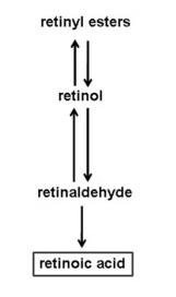 retinoic-acid-2.jpg