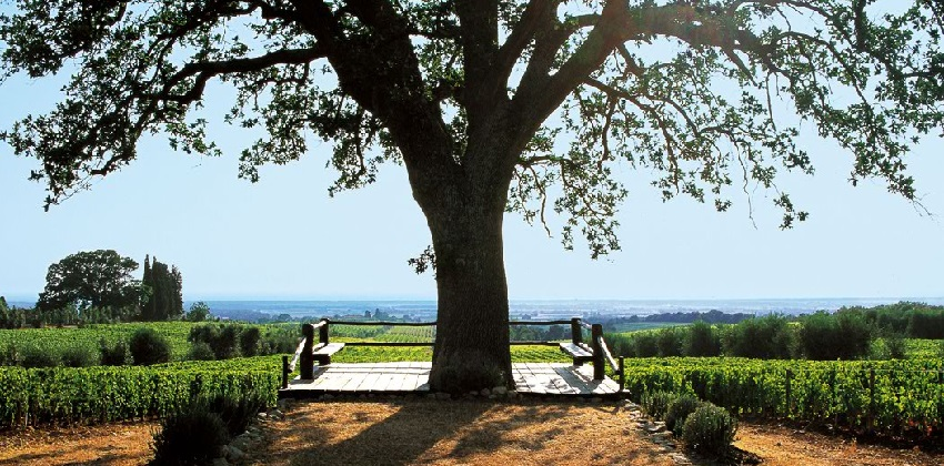 Supertuscans-wine-experience-Italys-Finest-01.jpg