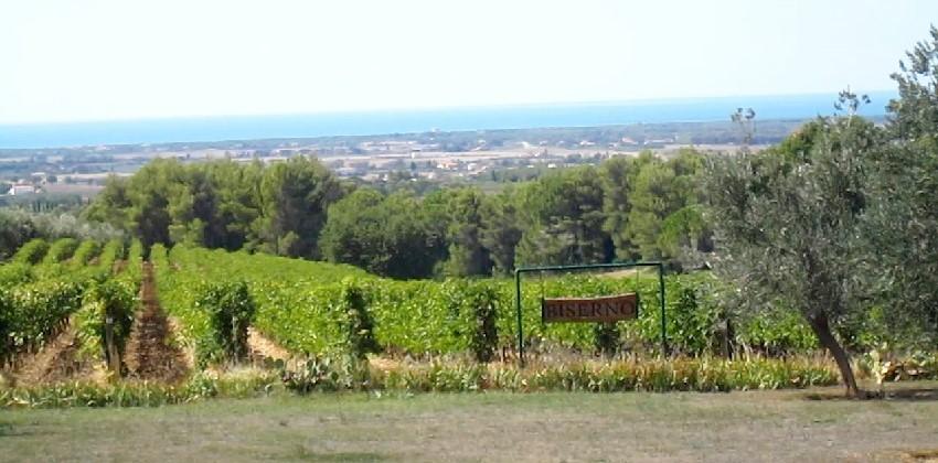 Supertuscans-wine-experience-Italys-Finest-16.jpg