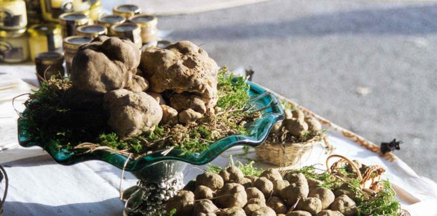 Barolo-and-white-truffle-hunt-Italys-Finest-6.jpg