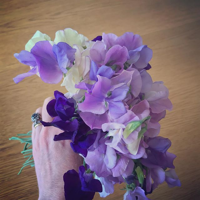 Summer joy from the garden! These just keep on giving #sweetpeas  I've even managed to fit in some Pilates in the last couple of weeks, it has meant rising when the hubby gets up and before the girls, but it's been worth it to enjoy the movement #earlymorningpilates #summersqueeze #tryingtofititallin