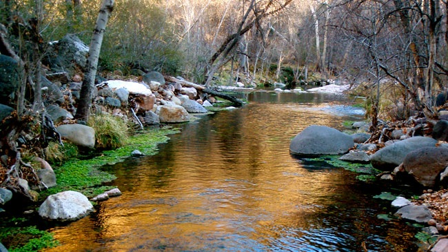 Sanctuary of Space - The Center sits on a quiet 28 acres of lush natural wilderness and is a peninsula that is bordered on 3 sides by a crisp flowing river. The property occupies a natural sanctuary to various indigenous birds, small animals, and deer.