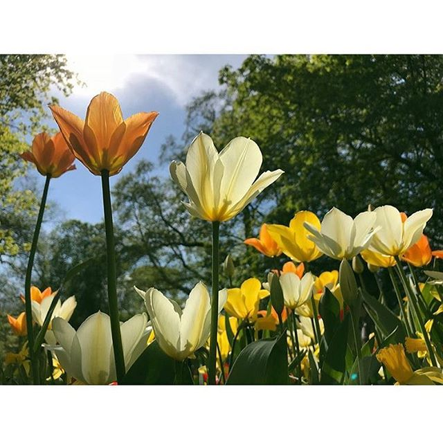 Visst är Sverige fint på våren 🌼🇸🇪? Photo: @ammwinijchai . . #naturen #svensknatur #swedishnature #hållbarhet #sustainability #nature #humlegården #consciousgeneration #carbonfootprint #consciouslabel