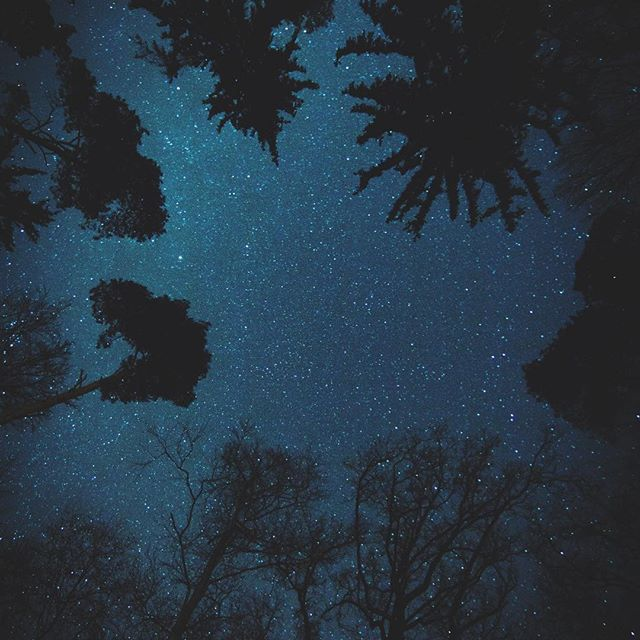 Nature says it best -good night everyone 🌒! . Photo by: @maxsaeling . . #naturen #nature #stars #goodnight #hållbarhet #sustainability #consciousgeneration #consciouslabel