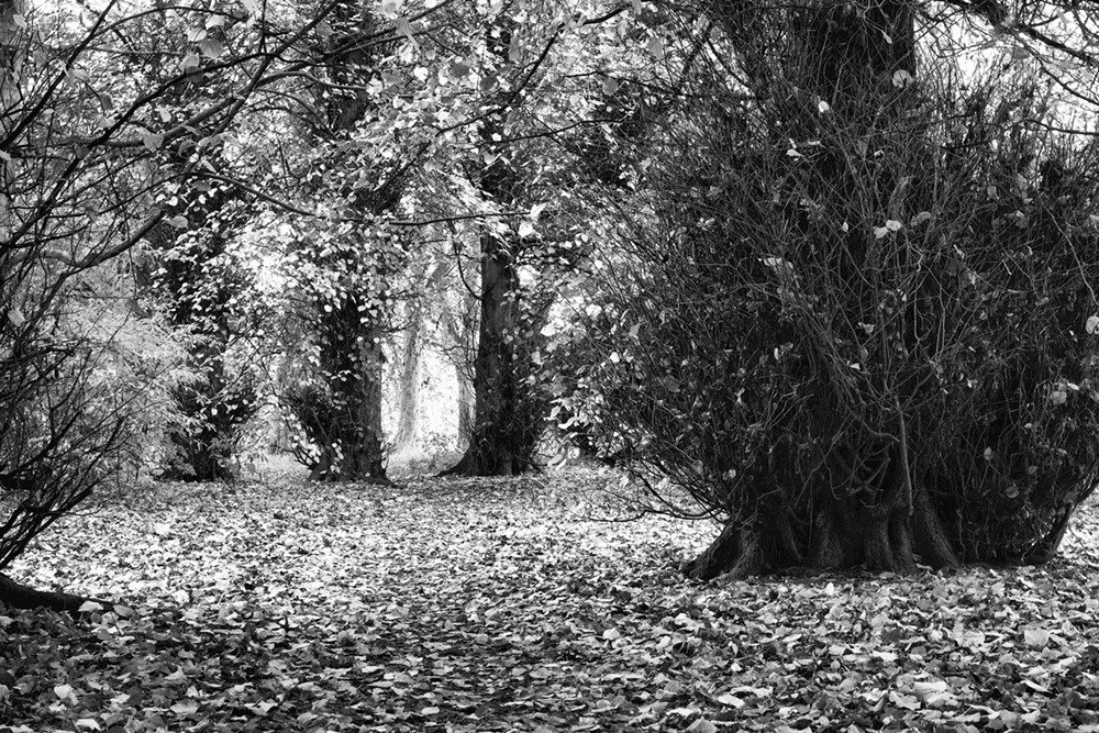 Avenue of Trees Acklam