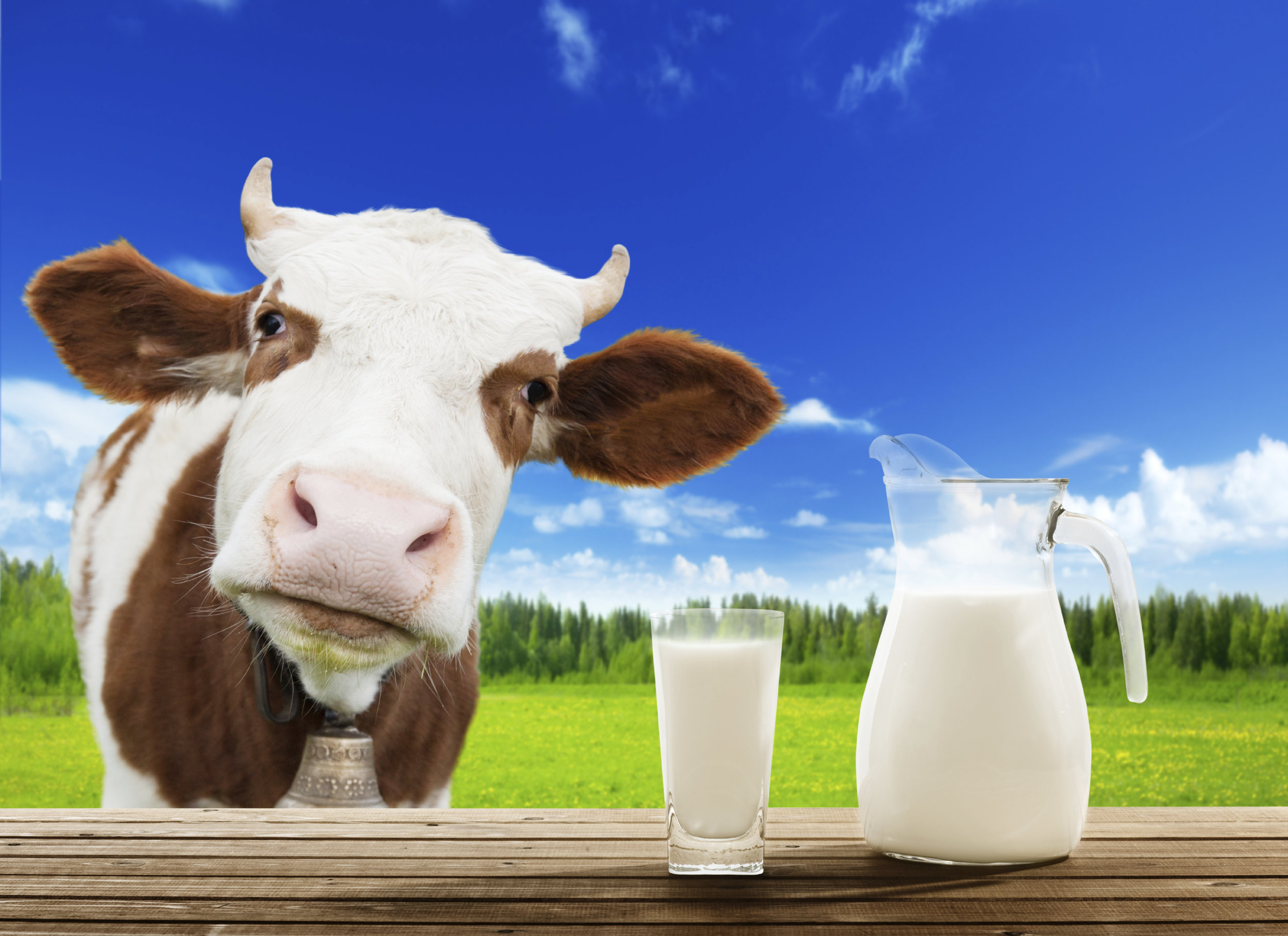 - This article discusses why milk should be considered as a primary sports beverage.https://www.progressivedairy.com/news/industry-news/milk-the-superior-product-with-inferior-marketing