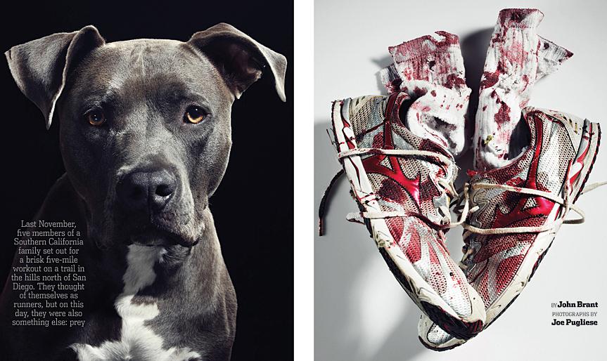 CROP-dogs-opener1.jpg