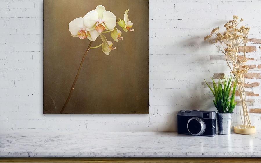 white-orchid-david-glen-larson.jpg
