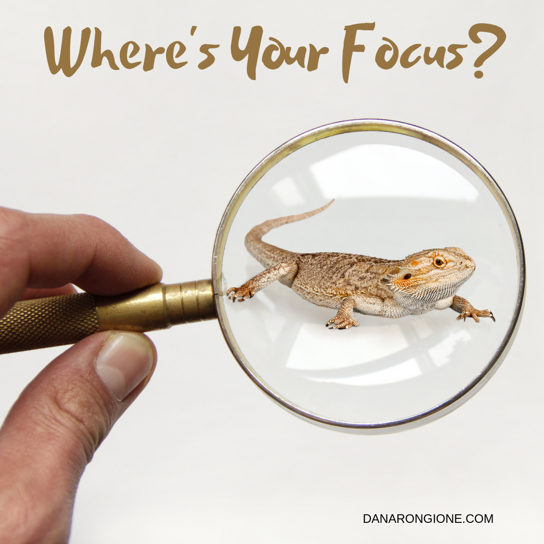 Where's Your Focus?.png