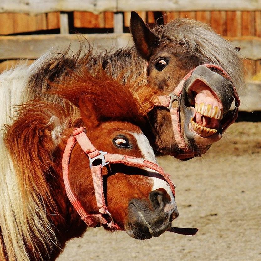 horses-1348383_1920.jpg