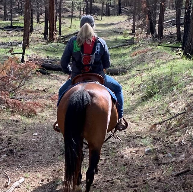 On the trail a favourite place to be in nature and quite. Thanks Miss Christy @christyprophet and Heidi for letting me ride alongside! 🐴 with Zoey, Cisco and Sugar! #montanamoment  #innature  #montanatrail  #horsesofinstagram  #trailride  #westkootenays