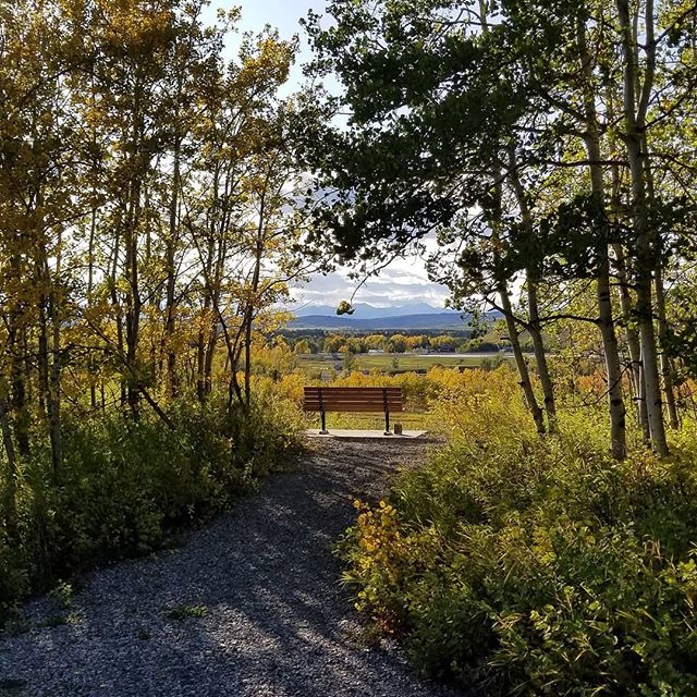 Our hood...many friends in the neighbour love this bench. Come and have a sit and gaze! 😉 #turnervalley  #lovethefoothills  #fallcolours  #ourhood  #calmbeforethesnow