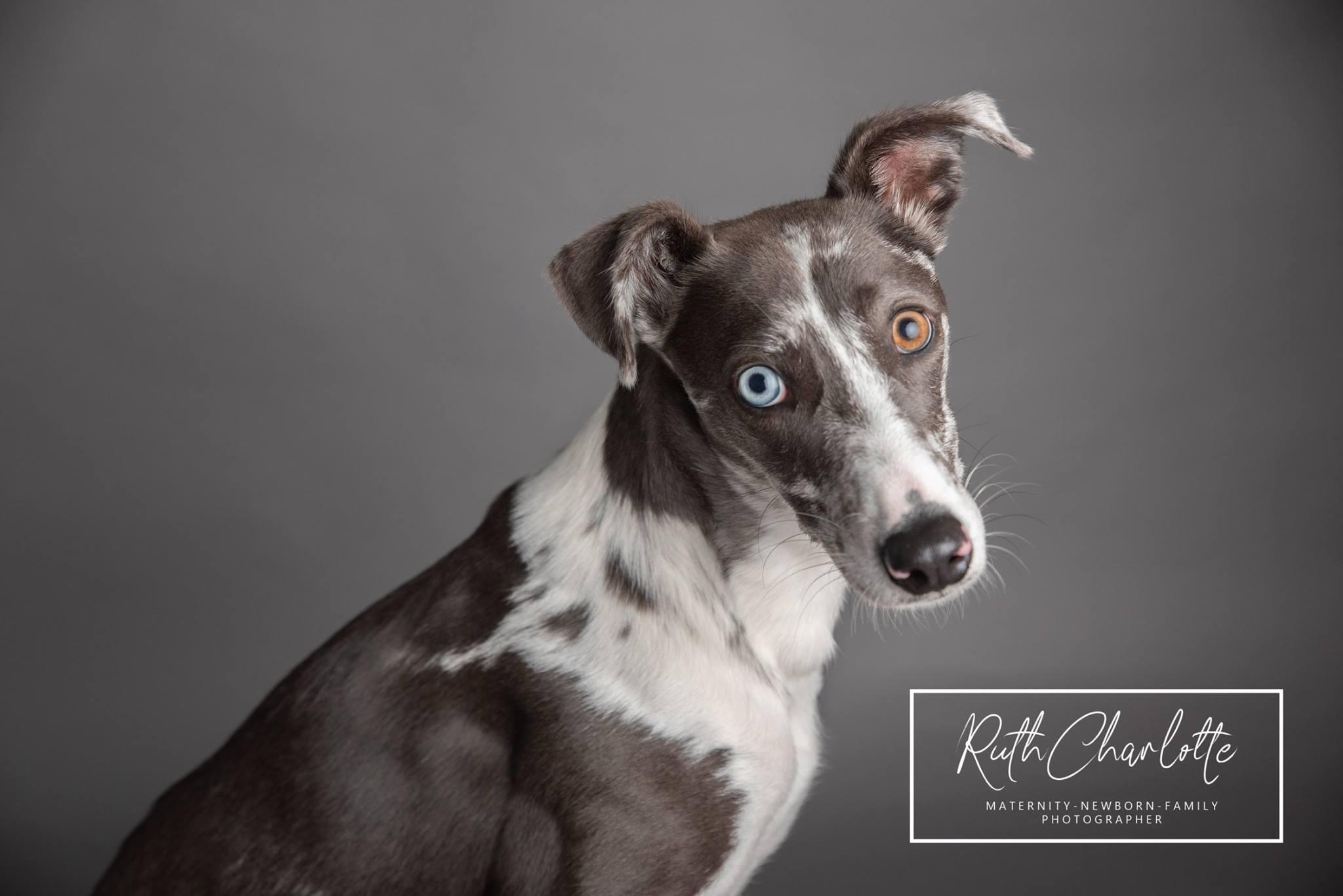 doggy photoshoot ayrshire