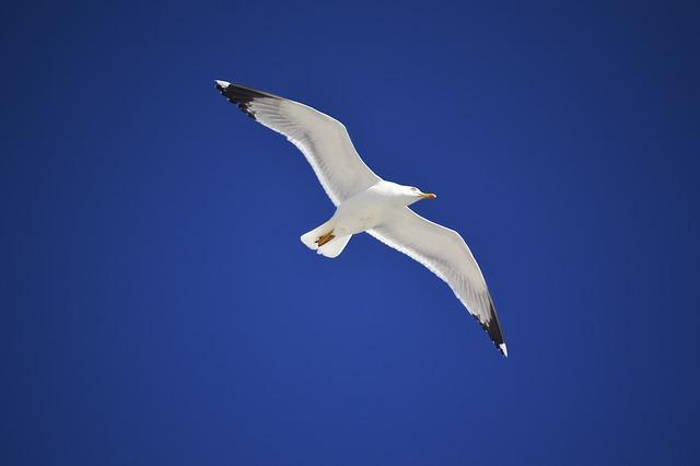seagull-1983674_640.jpg
