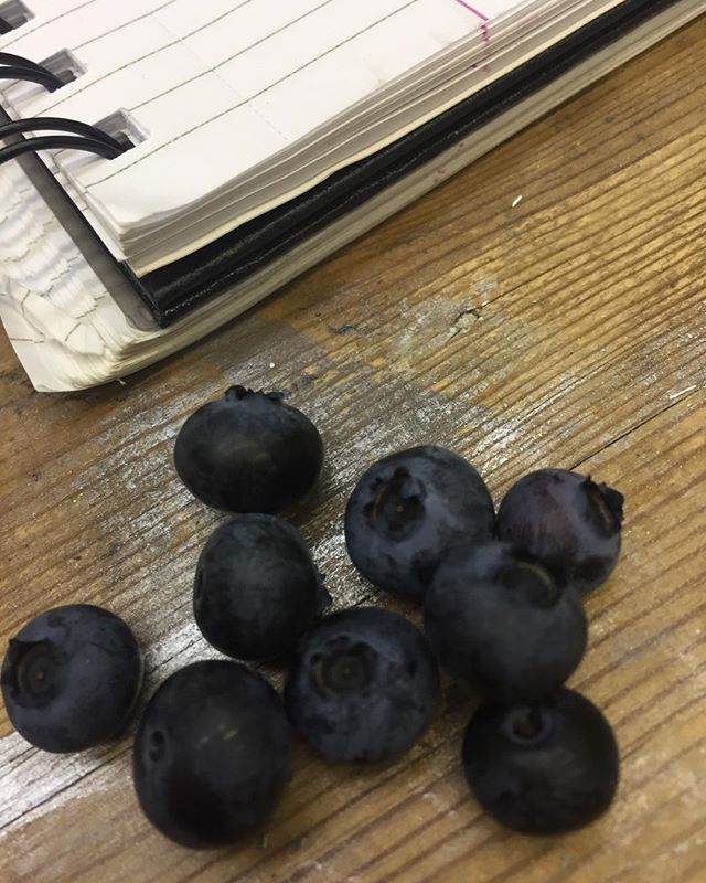 Perks to having the best clients in Brooklyn- fresh picked blueberries from the Callidus Guild Studio yard